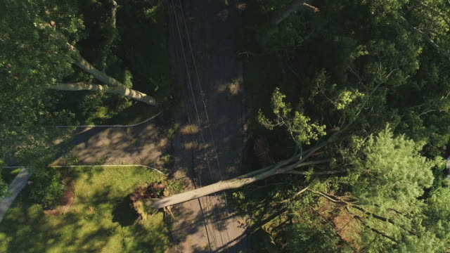 a tree has fallen because of the strong wind and it barricaded the street and destroyed power lines and internet and tv cables in a small town in new jersey after a storm.  aerial video with the descending camera motion. - cable stock videos & royalty-free footage