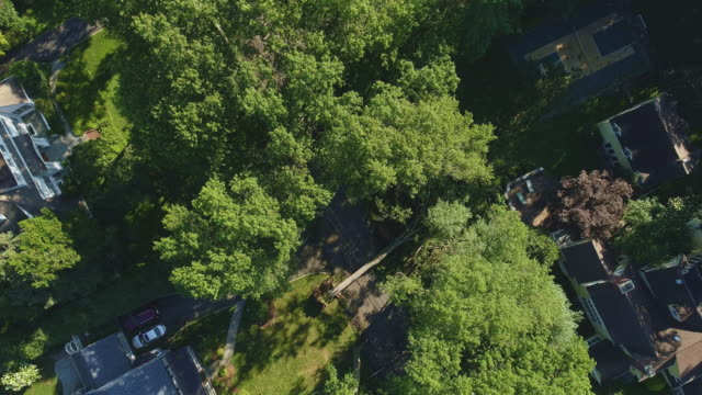 a tree has fallen because of the strong wind and it barricaded the street and destroyed power lines and internet and tv cables in a small town in new jersey after a storm.  aerial video with the descending camera motion. - cable tv stock videos & royalty-free footage
