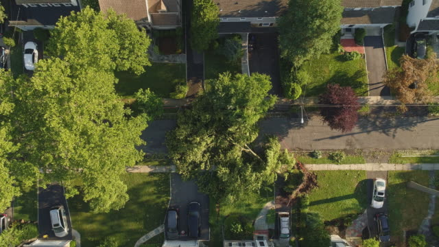 a tree has fallen because of the strong wind and it barricaded the street and destroyed power lines and internet and tv cables in a small town in new jersey after a storm.  aerial video with the panning camera motion. - cable tv stock videos & royalty-free footage