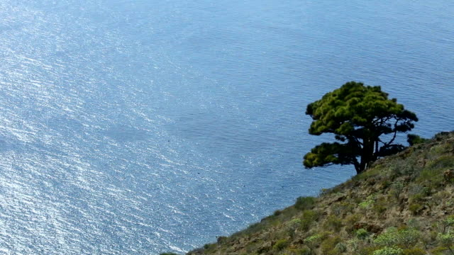 tree, high above the sea - balearic islands stock videos and b-roll footage