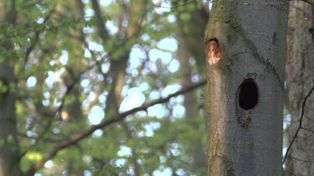 tree hollow pocks deciduous tree - deciduous tree stock videos & royalty-free footage
