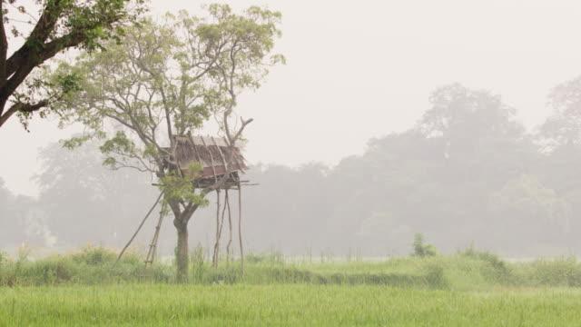 vídeos de stock, filmes e b-roll de casa na árvore ms na paisagem rural, sri lanka - treehouse