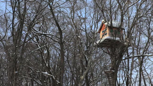 vídeos de stock, filmes e b-roll de ms pan tree house in snow forest / bie, japan - treehouse