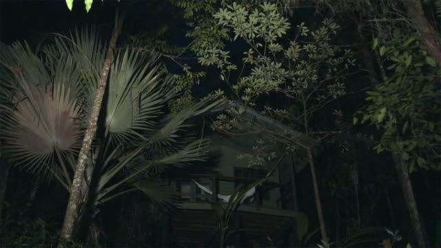 vídeos de stock, filmes e b-roll de ws, la, tree house in tropical rainforest at night, lights on, mossman, queensland, australia - treehouse
