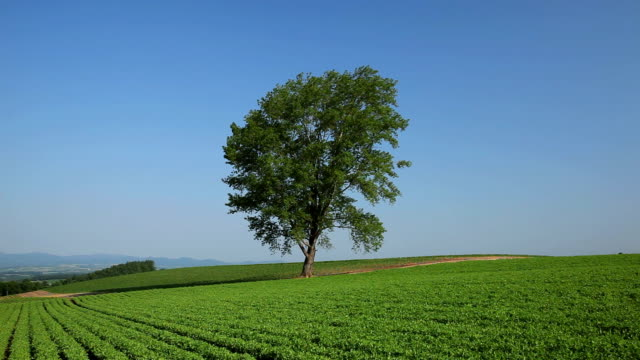 tree in a field, hokkaido, japan - hokkaido stock videos & royalty-free footage