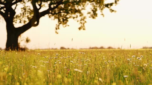 春の牧草地で ds ツリー - ローアングル点の映像素材/bロール