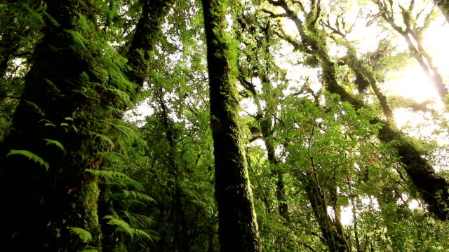 hd: tree in deep tropical rainforest - tropical tree stock videos & royalty-free footage