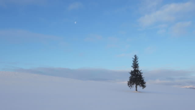 tree in empty snowy landscape, wide - kamikawa subprefecture stock videos and b-roll footage