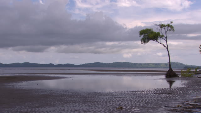tree in estuary with visible roots due to erosion in coastal area of vunidogoloa, fiji, where waters are encroaching due to climate change. - pacific ocean stock videos & royalty-free footage