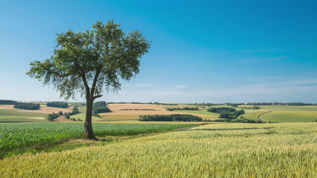 tree in farmland and grassland / germany - wide stock-videos und b-roll-filmmaterial