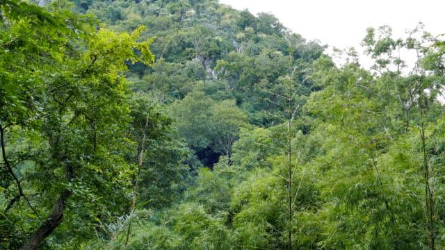 stockvideo's en b-roll-footage met boom in bos op berg. - conifeer