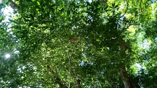 水の光の反射を持つフォレスト内のツリー - 自然美点の映像素材/bロール