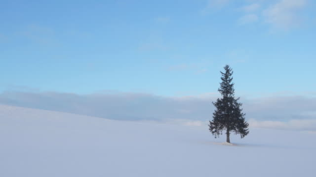 tree in japanese winter landscape, wide - kamikawa subprefecture stock videos and b-roll footage