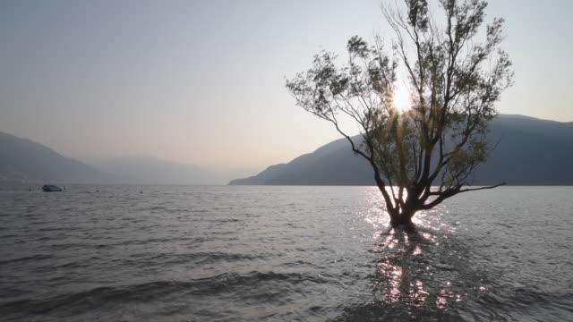 tree in lago maggiore at sunrise - 不在点の映像素材/bロール