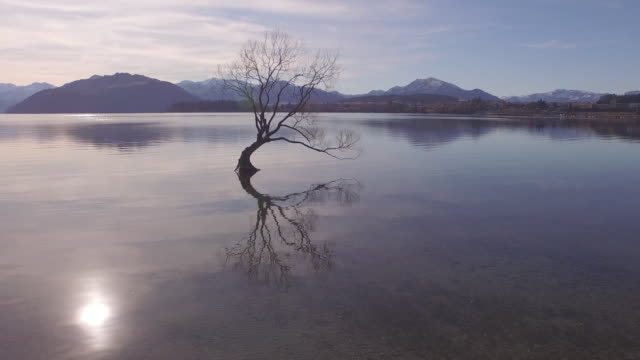tree in lake - single tree stock videos & royalty-free footage