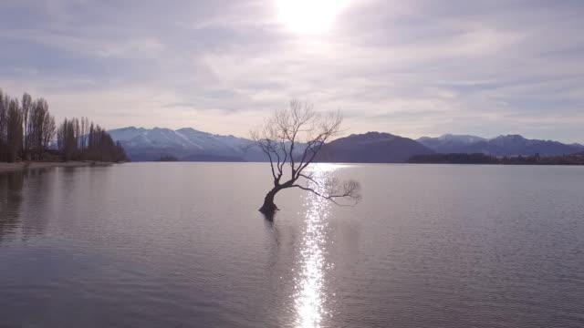 vídeos de stock, filmes e b-roll de tree in lake - lago