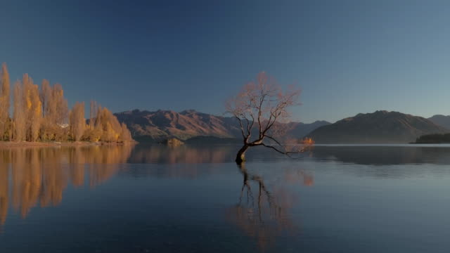 Tree in lake