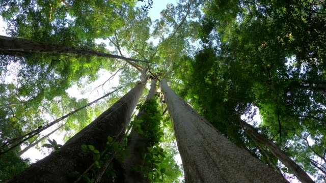 tree in rainforest looking up with blue sky - large stock videos & royalty-free footage