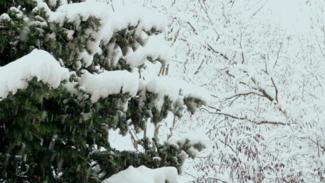 tree in snowfall - focus on foreground stock videos & royalty-free footage