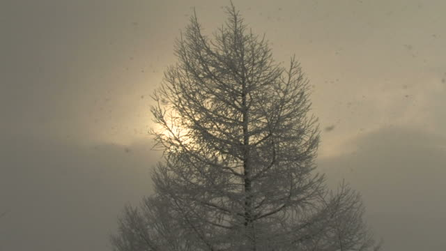 tree in snowstorm - fukuoka prefecture stock videos & royalty-free footage