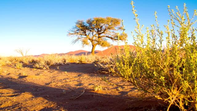 vídeos de stock e filmes b-roll de ds ws árvore no deadvlei - savana