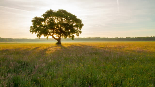T/L árvore no Prado em sunrise
