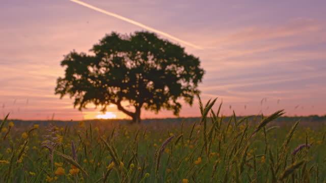 DS arbre dans les meadow au coucher du soleil