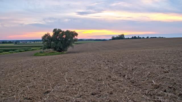 DS-Baum in der Mitte ein Feld bei Sonnenuntergang