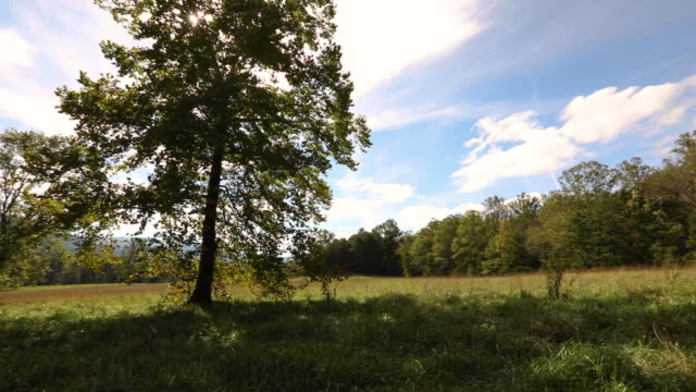 tree in the middle of a field in cade's cove - tennessee stock videos & royalty-free footage