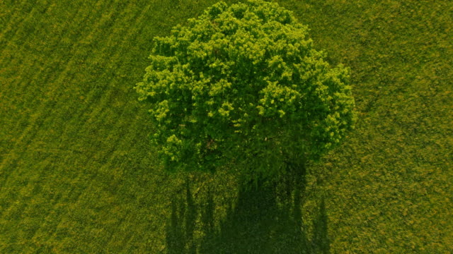 aerial tree in the middle of a meadow - single tree stock videos & royalty-free footage
