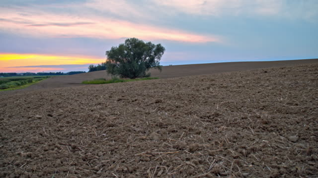 ds tree in the middle of a plowed field - plowed field stock videos and b-roll footage