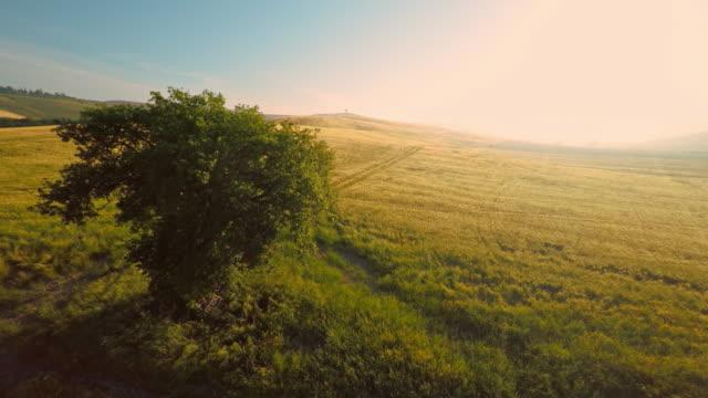 vídeos de stock e filmes b-roll de árvore aérea no meio de um campo de trigo - toscana