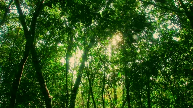 tree in the wind - tropical rainforest stock videos & royalty-free footage