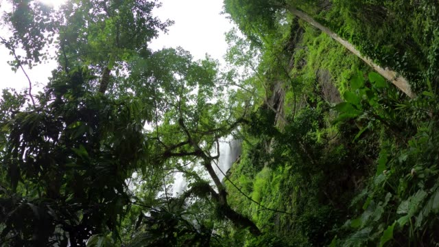 tree in tropical rainforest - tropical tree stock videos & royalty-free footage