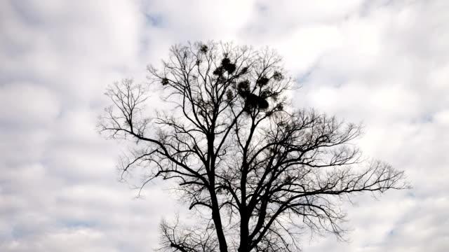tree in winter - time lapse - kvist bildbanksvideor och videomaterial från bakom kulisserna
