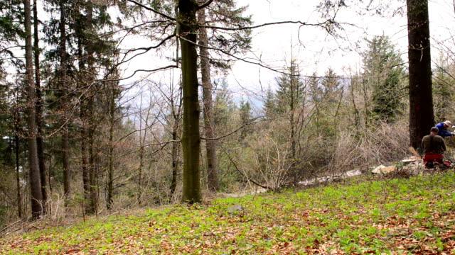 vídeos de stock, filmes e b-roll de caindo na árvore - forester
