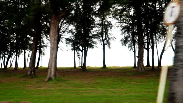 ツリーは、ビーチの端には - 見渡す点の映像素材/bロール