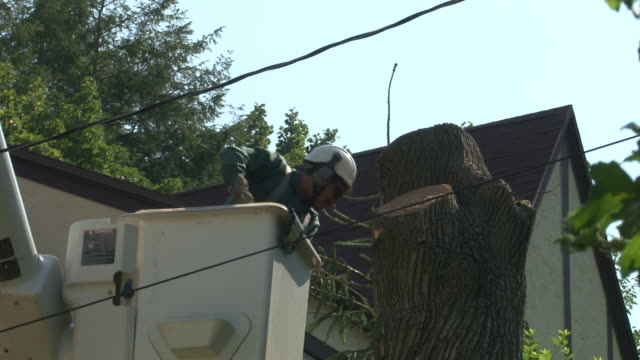 tree is taken down from a home in westchester county, new york / workers from a tree removal company cut and remove the base of a large maple tree /... - おがくず点の映像素材/bロール