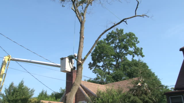 tree is taken down from a home in westchester county, new york / working from a bucket truck cuts a man cuts and removes branches from a tree in... - おがくず点の映像素材/bロール