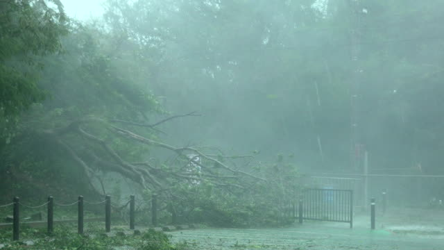 tree knocked over by powerful eyewall wind and rain as typhoon trami hits okinawa japan - gale stock videos and b-roll footage