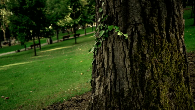 tree leaf formation - plant bark stock videos and b-roll footage