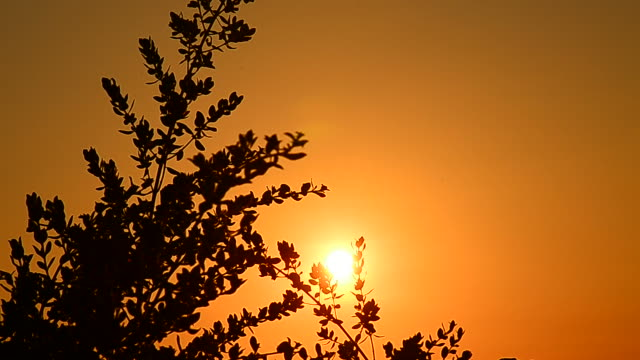 tree leafs in the wind with sunset silhouette - full hd format stock videos & royalty-free footage