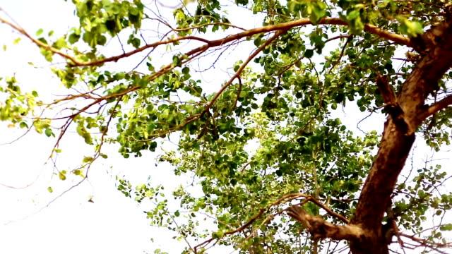 vídeos y material grabado en eventos de stock de árbol de hojas meciéndose por el viento al aire libre en la naturaleza - desgastado por el tiempo