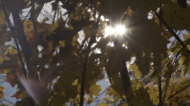 Tree leaves and Sunlight