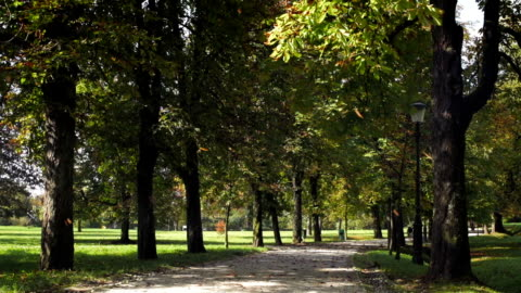tree leaves falling down in a lovely park - public park stock videos & royalty-free footage