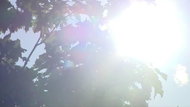 tree leaves in sun - 小枝点の映像素材/bロール