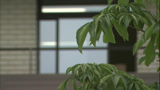 Tree leaves tremble in the wind near the Utsunomiya City Office in Japan.