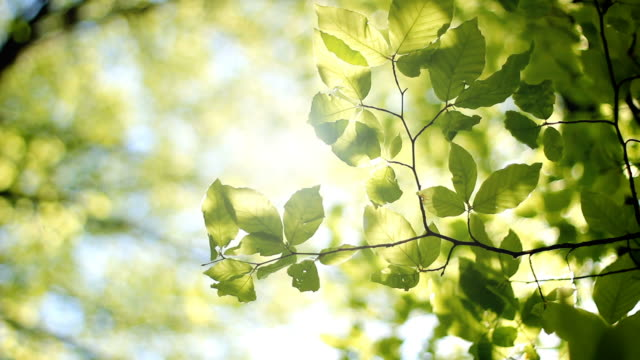 tree leaves - sunlight stock videos & royalty-free footage
