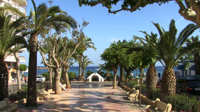 ms, tree lined alley and sea in background, santa eularia des riu, ibiza, balearic islands, spain - fan palm tree stock videos & royalty-free footage