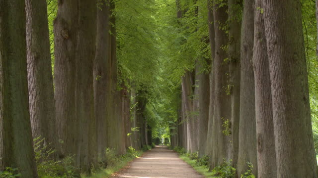 ws tree lined footpath in schlossgarten park / eutin, schleswig-holstein, germany - schleswig holstein stock videos & royalty-free footage